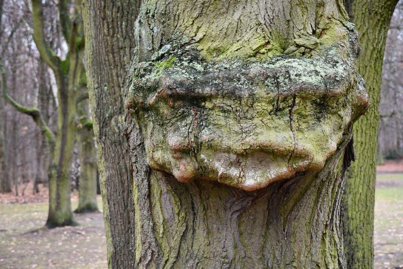 Merkwürdiges Formergebnis auf hölzernen Barkenaussehung wie magischem Geschöpfgesicht Baumrindeoberfl?chennahaufnahme alter Baum  lizenzfreies stockfoto
