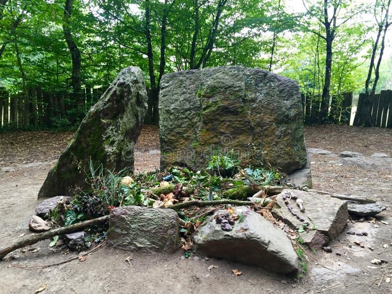 Merlin skog arkivfoto