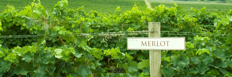 Merlot van de wijngaard Teken stock fotografie