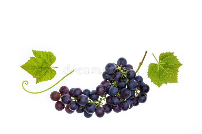 Merlot winogrona z liśćmi odizolowywającymi na białym tle obrazy stock