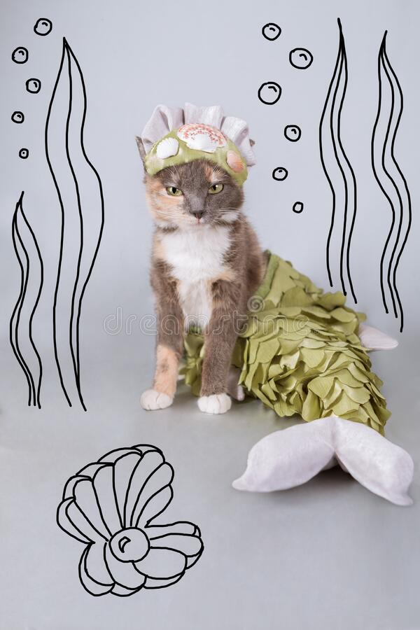 The mermaid queen cat sits on a gray background among the drawn seabed. A three-colored cat, a mermaid queen in a crown decorated with shells, with a fish tail royalty free stock photos