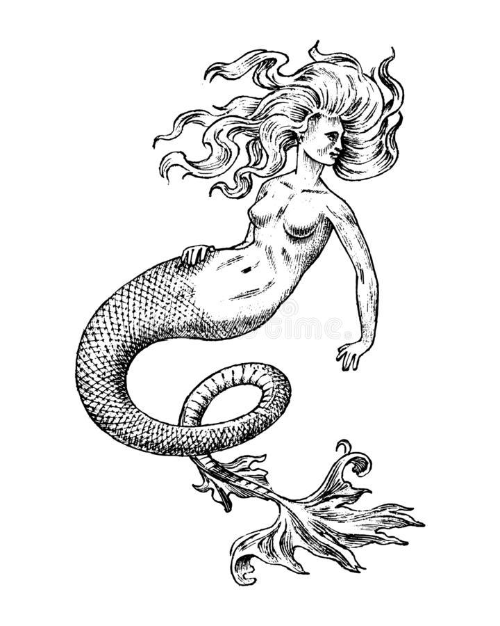 Mermaid woman. Sea siren. Antique Mythical Greek monster. Mythological animal. Ocean symbol. Fantastic creatures in the. Old vintage style tattoo. Engraved hand royalty free illustration