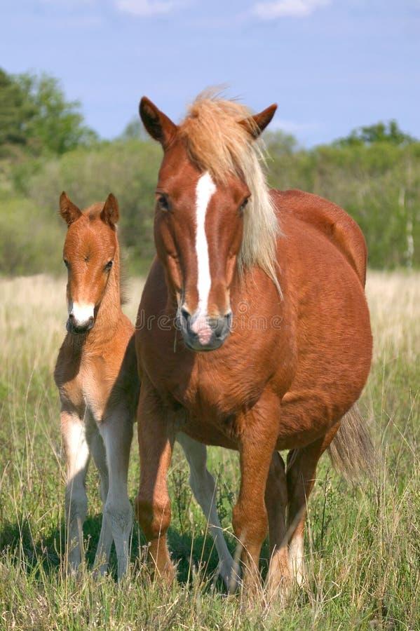 Merrie en zoon royalty-vrije stock afbeelding