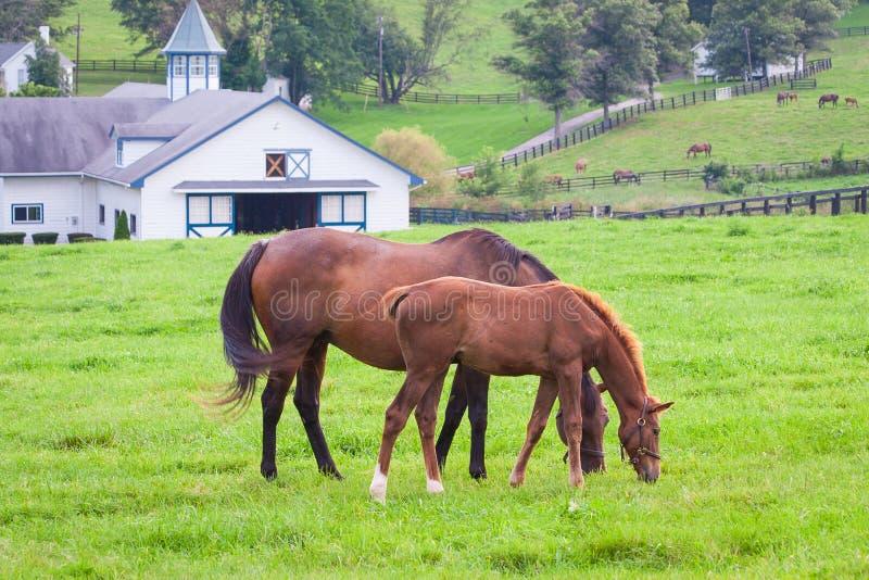 Merrie met haar veulen op weilanden van paardlandbouwbedrijven royalty-vrije stock afbeeldingen