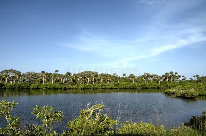 Download Merritt Wyspy Rezerwat Dzikiej Przyrody Zdjęcie Stock - Obraz złożonej z schronienie, florida: 41950330