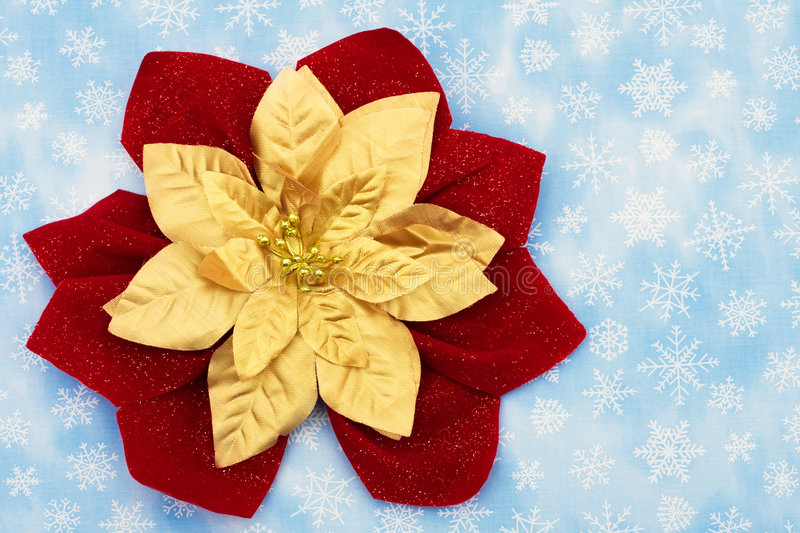 Merry Christmas. Red and gold poinsettia on snowflake background, merry Christmas royalty free stock image