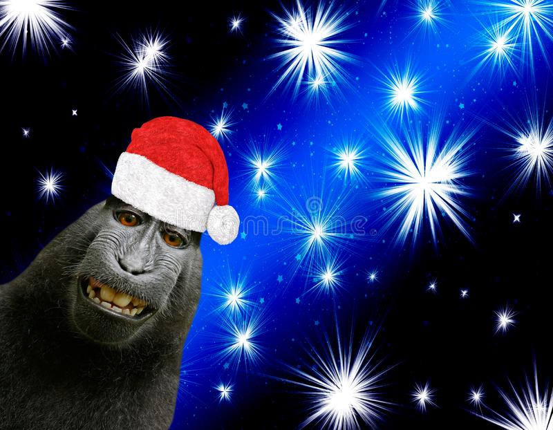 Merry christmas card a funny chimpanzee monkey wearing a santa claus bonnet isolated on a black and blue background with shining b. Right stars royalty free stock photos