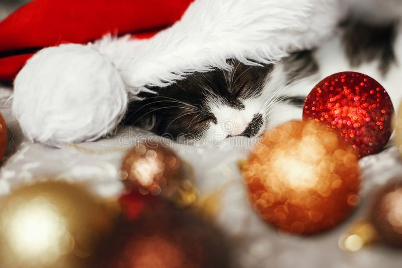 Merry Christmas concept. Cute kitty sleeping in santa hat on bed. With gold and red christmas baubles in festive room. Atmospheric image. Season`s greetings stock photos