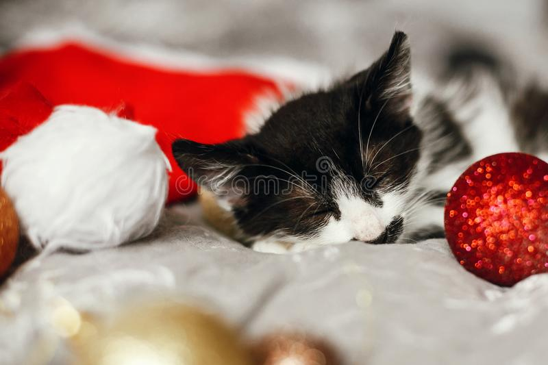 Merry Christmas concept. Cute kitty sleeping in santa hat on bed. With gold and red christmas baubles in festive room. Atmospheric image. Season`s greetings stock images