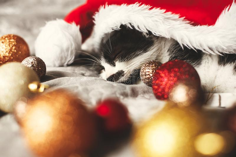 Merry Christmas concept. Cute kitty sleeping in santa hat on bed. With gold and red christmas baubles in festive room. Atmospheric image. Season`s greetings stock photography