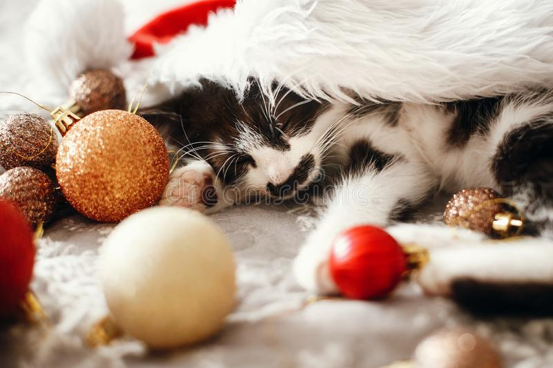 Merry Christmas concept. Cute kitty sleeping in santa hat on bed. With gold and red christmas baubles in festive room. Atmospheric image. Season`s greetings royalty free stock photos