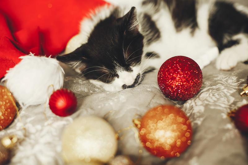 Merry Christmas concept. Cute kitty sleeping in santa hat on bed. With gold and red christmas baubles in festive room. Atmospheric image. Season`s greetings royalty free stock photo