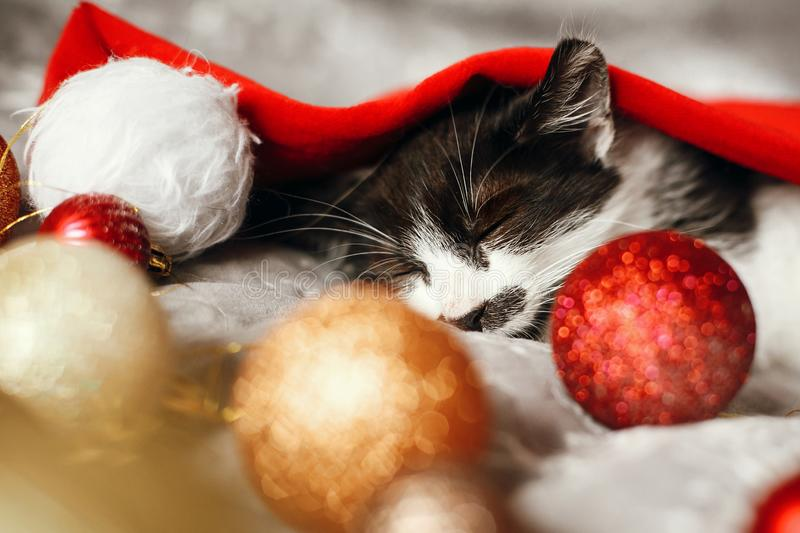 Merry Christmas concept. Cute kitty sleeping in santa hat on bed. With gold and red christmas baubles in festive room. Atmospheric image. Season`s greetings royalty free stock image