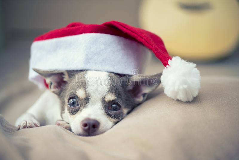 Merry Christmas concept. A little cute dog with Santa hat on bed stock image