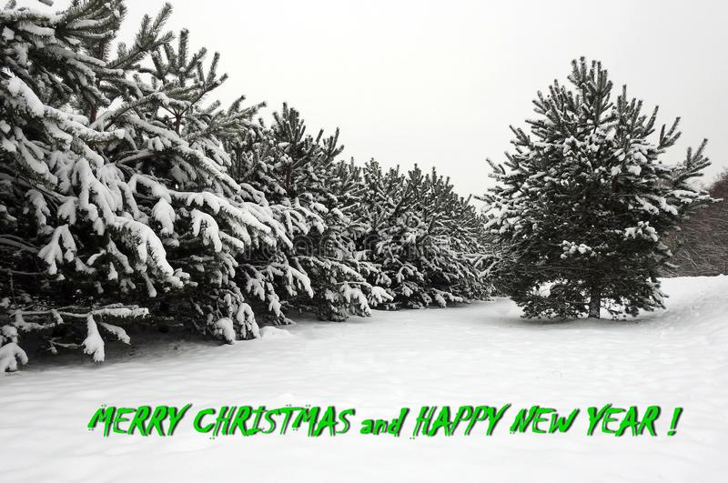 Merry Christmas and Happy New year card done using tree in winter , Lithuania. Beautiful natural snowy trees and note - Merry Christmas and Happy New Year stock photography