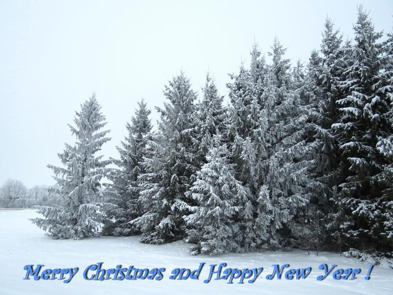Merry Christmas and Happy New Year card done using trees in winter , Lithuania. Beautiful natural snowy fir trees and note - Merry Christmas and Happy New Year stock photos