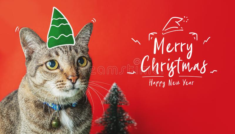 Merry christmas and happy new year doodle with cat nome and christmas tree on red background,holiday greeting card.  stock photography