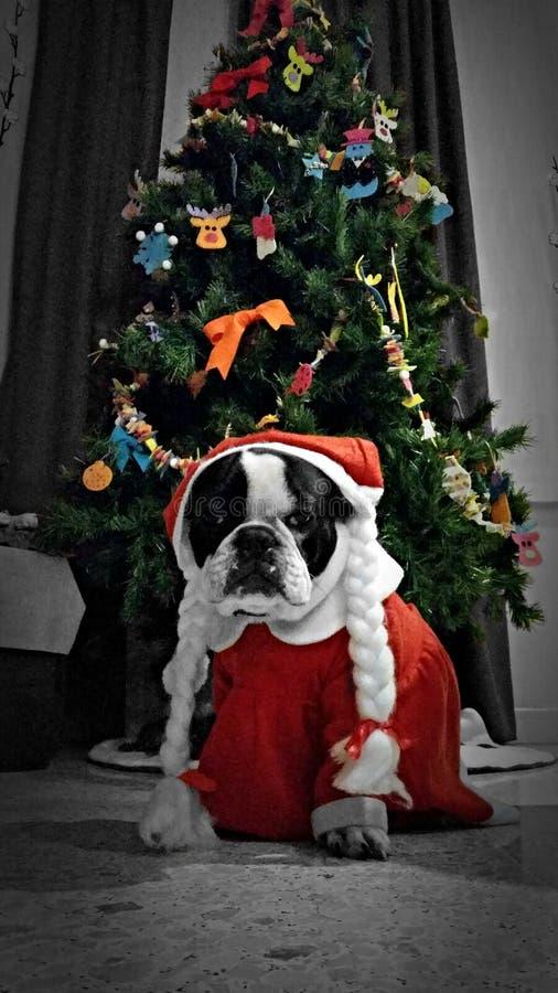 Merry Christmas!! stock photo