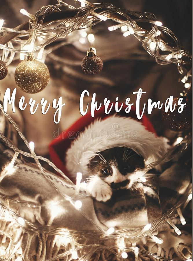 Merry Christmas text on cute kitty in santa hat sitting in baske. T with lights under christmas tree in festive room. Season`s greetings card. Happy Holidays and royalty free stock image