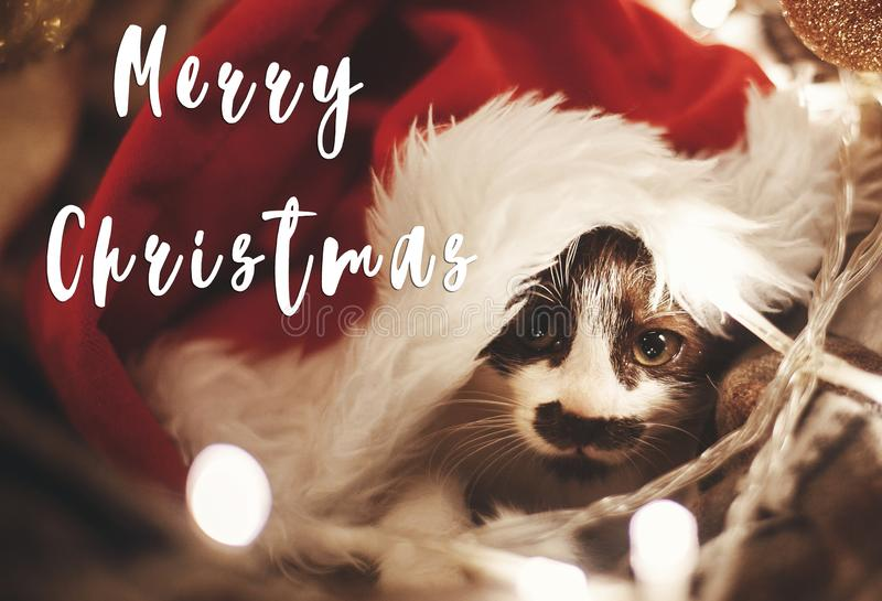 Merry Christmas text on cute kitty in santa hat sitting in baske. T with lights under christmas tree in festive room. Season`s greetings card. Happy Holidays and stock images