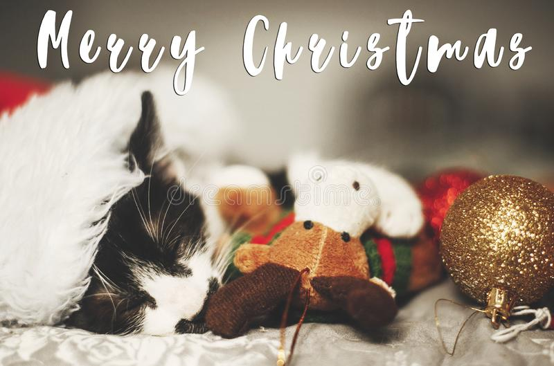 Merry Christmas text on cute kitty sleeping in santa hat on bed. With reindeer and baubles in festive room. Season`s greetings card. Happy Holidays and Happy royalty free stock image