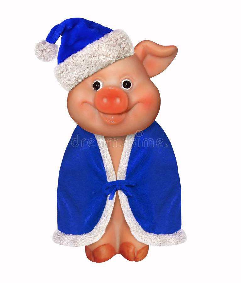Merry pig in a blue hat and a cloak. There is a merry pig wears a Santa Claus hat and a blue cloak. White background. New Year 2019 royalty free stock photo