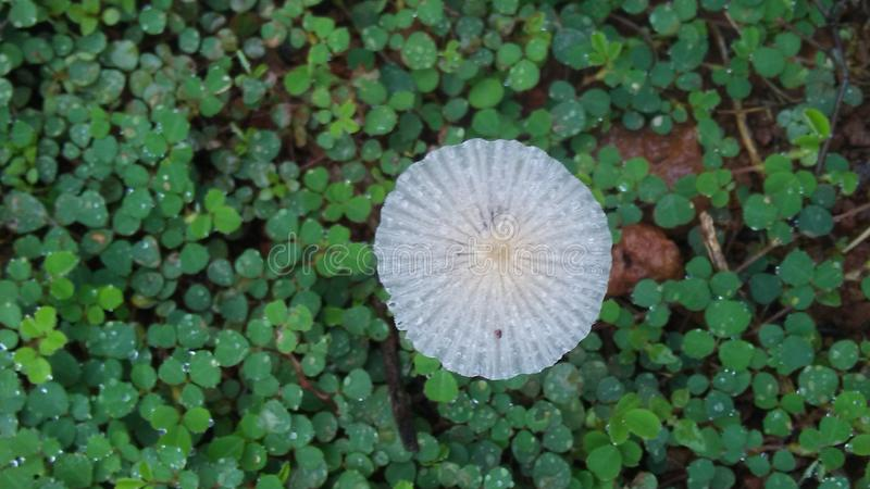 Merveille en nature photo stock