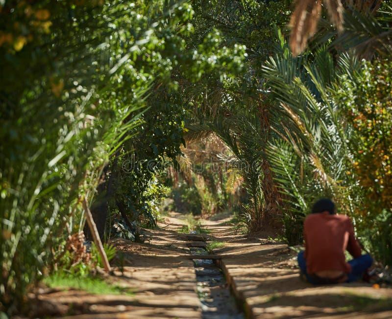Merzouga,摩洛哥- 2018年12月04日:有一条小河的棕榈隧道在中部,在摩洛哥的绿洲 免版税库存照片