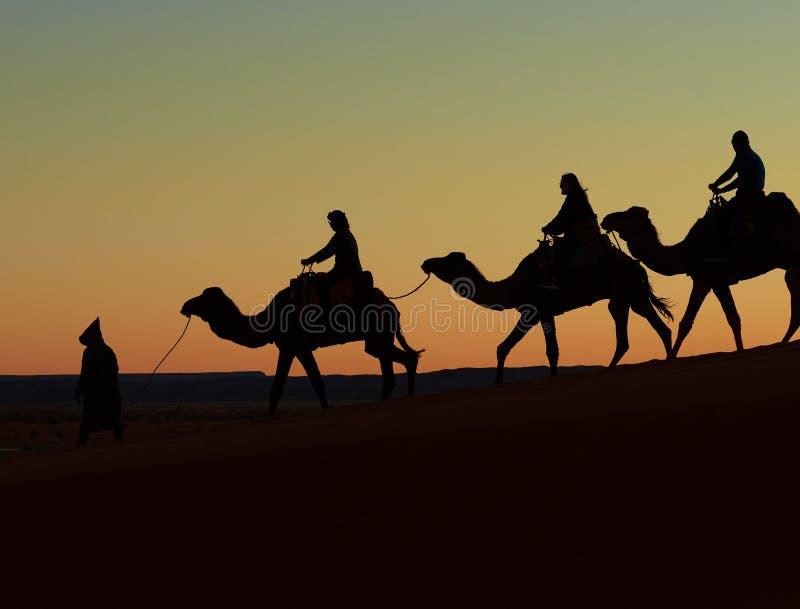 Merzouga,摩洛哥- 2018年12月03日:背后照明骆驼日落 库存照片