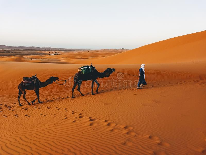 Merzouga desert in Morocco. Journey with camels royalty free stock photos