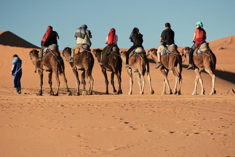 Merzouga Maroko, Grudzień, - 05, 2018: wielbłądzia wycieczka w merzouga pustyni zdjęcie royalty free