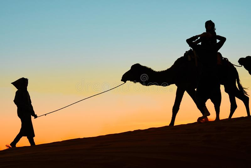 Merzouga Maroko, Grudzie?, - 03, 2018: backlight wielb??d?w zmierzch obrazy royalty free