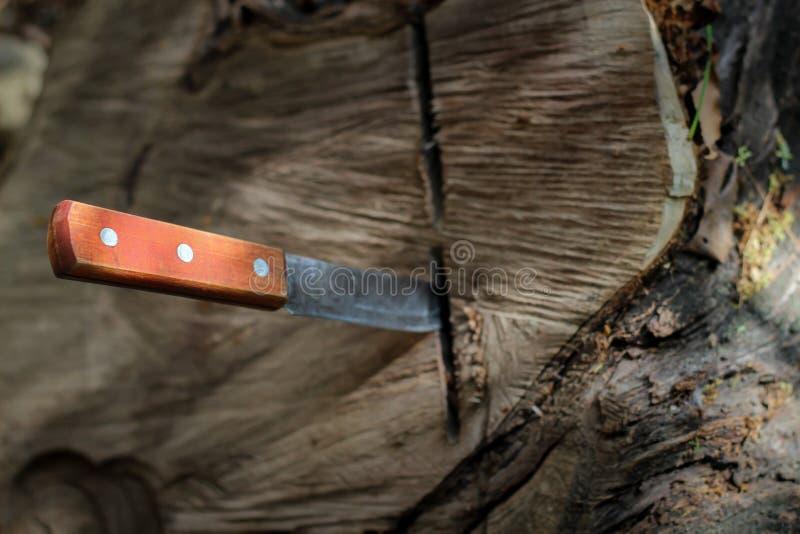 Mes met houten die handvat, in een stuk van boomstam wordt geplakt royalty-vrije stock foto