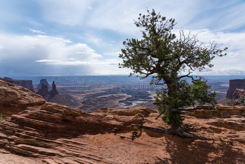Mesa Arch immagine stock libera da diritti