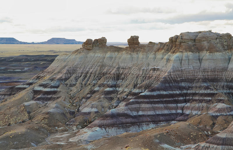 MESA blu, Forest National Park petrificato, fotografia stock libera da diritti
