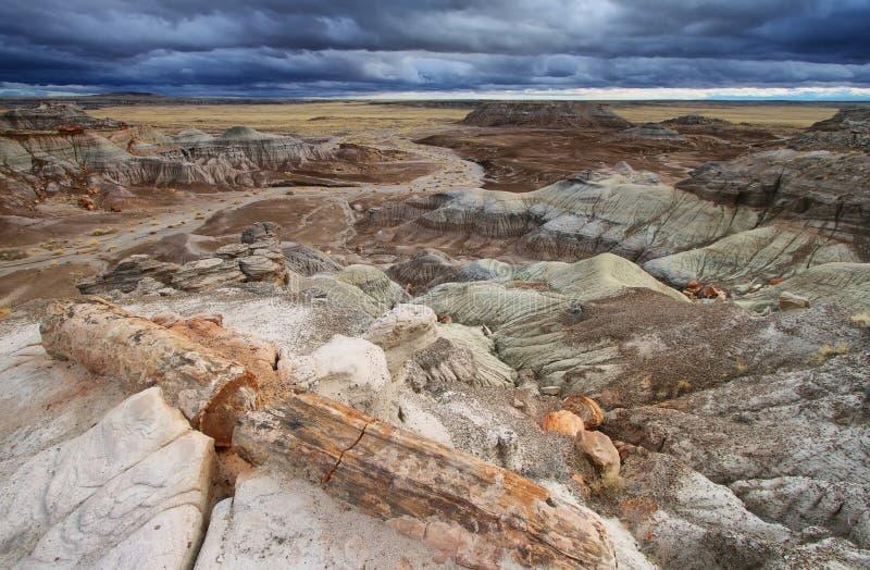 MESA blu, Forest National Park petrificato, immagine stock