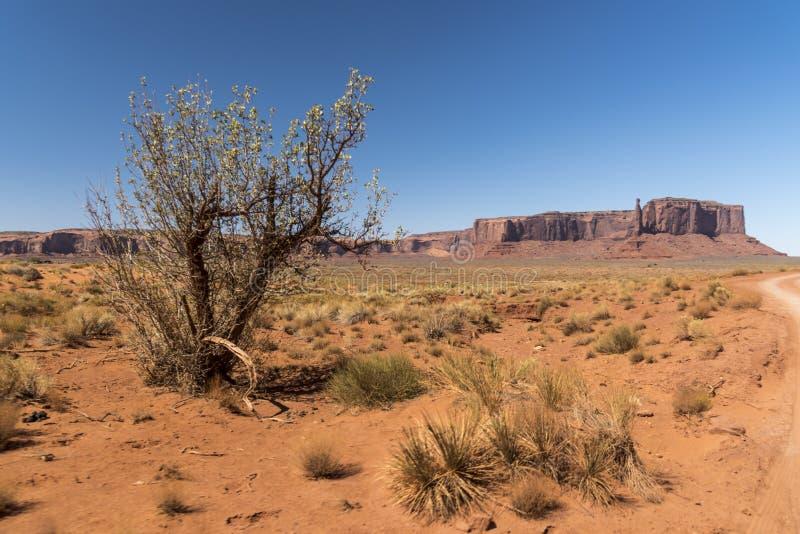 Mesa, Buttes och vegetationmonumentdal Arizona royaltyfri fotografi