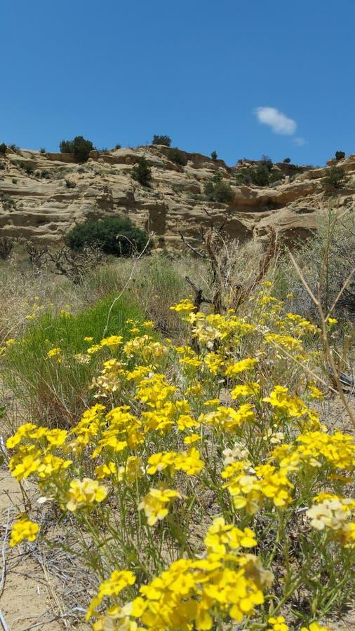 Mesa com o remendo amarelo da flor fotos de stock