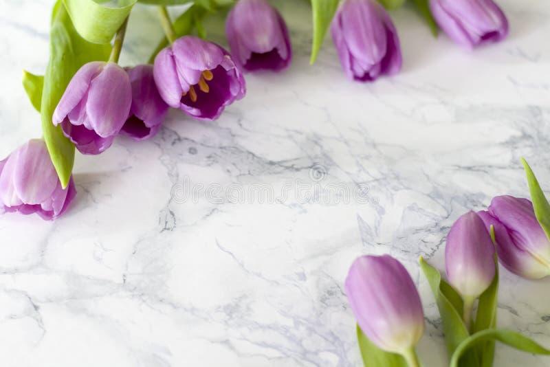 A mesa de escritório da mulher com flor da mola floresce, tulipas no fundo branco foto de stock