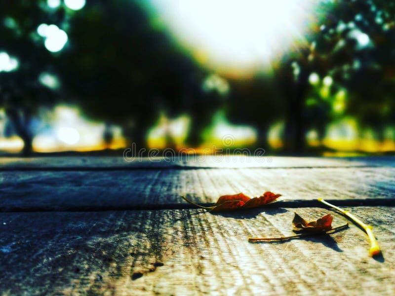 Mesa de otoño en el parque de Islamabad, Pakistán imagen de archivo