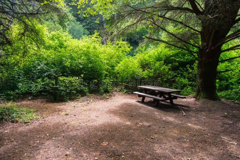 Mesa de picnic debajo de un árbol de ciprés grande foto de archivo
