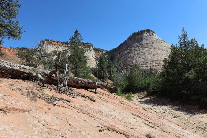 MESA della scacchiera in Zion National Park fotografia stock