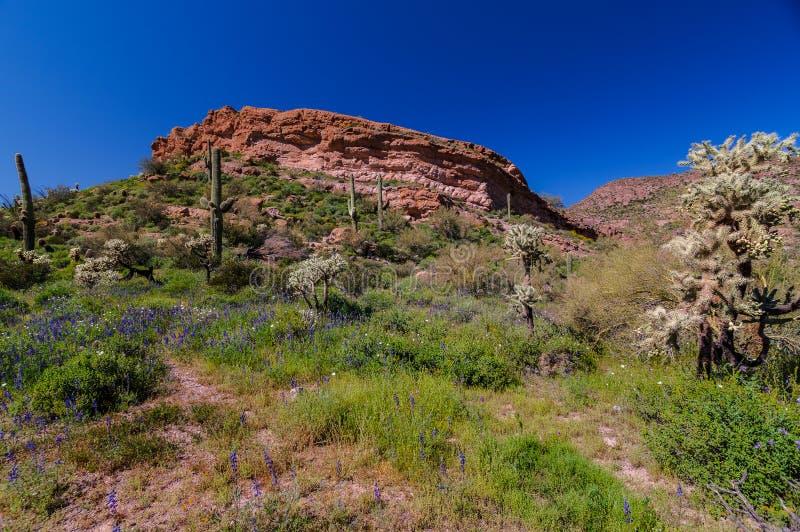 Mesa Trail Superstition Mountain Wilderness nero Arizona fotografia stock libera da diritti