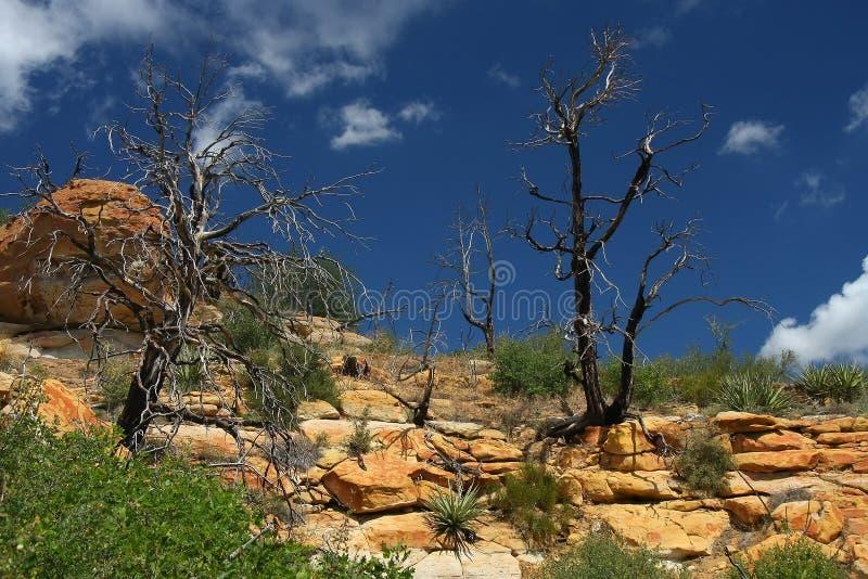 Mesa Verde στοκ φωτογραφίες