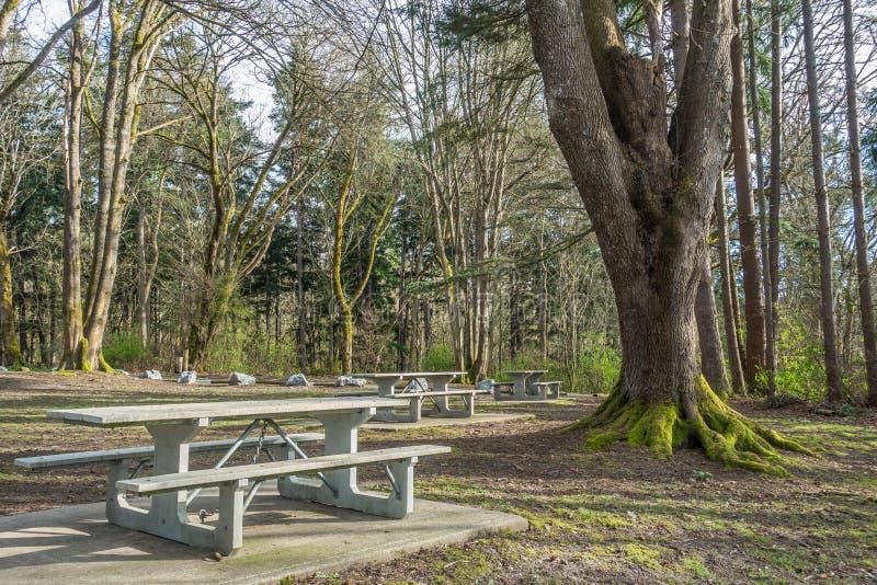 Mesas de picnic y árboles foto de archivo libre de regalías
