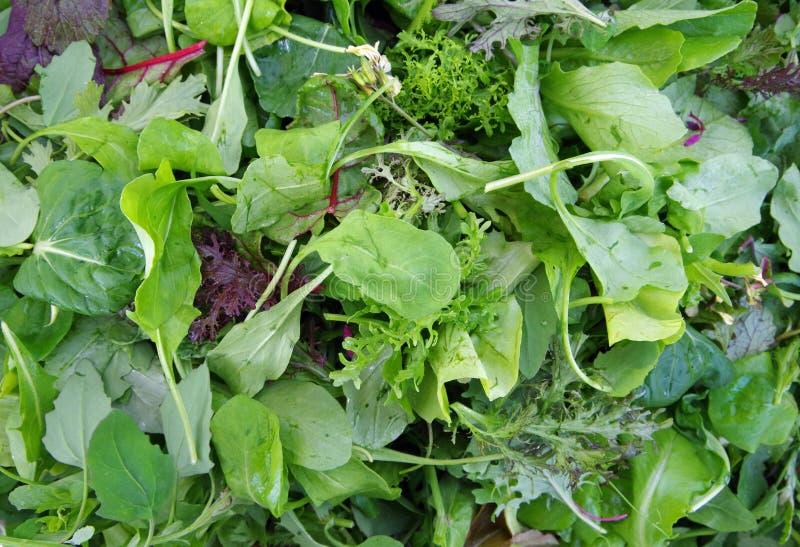 Mesclun salad piled closeup royalty free stock photo
