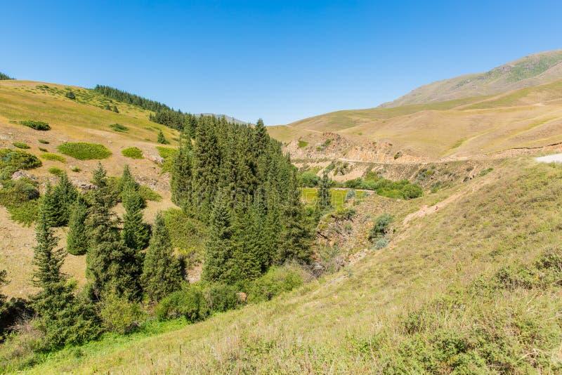 Meseta del montaje en la montaña de Tien Shan en Almaty, Kazajistán, Asia en el verano foto de archivo libre de regalías