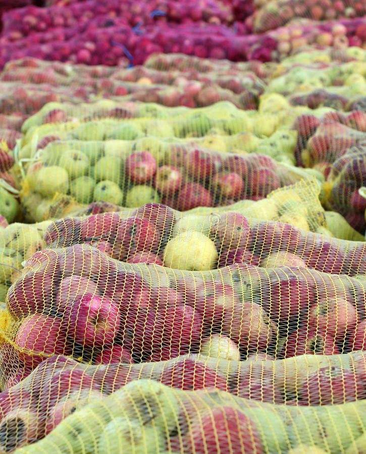 A mesh bags of freshly picked apples for juice industry on early morning. Picture of a A mesh bags of freshly picked apples for juice industry on early morning royalty free stock photography