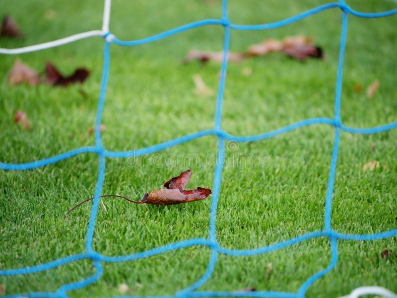 Mesh soccer playground with dry maple leaf. P stock photography