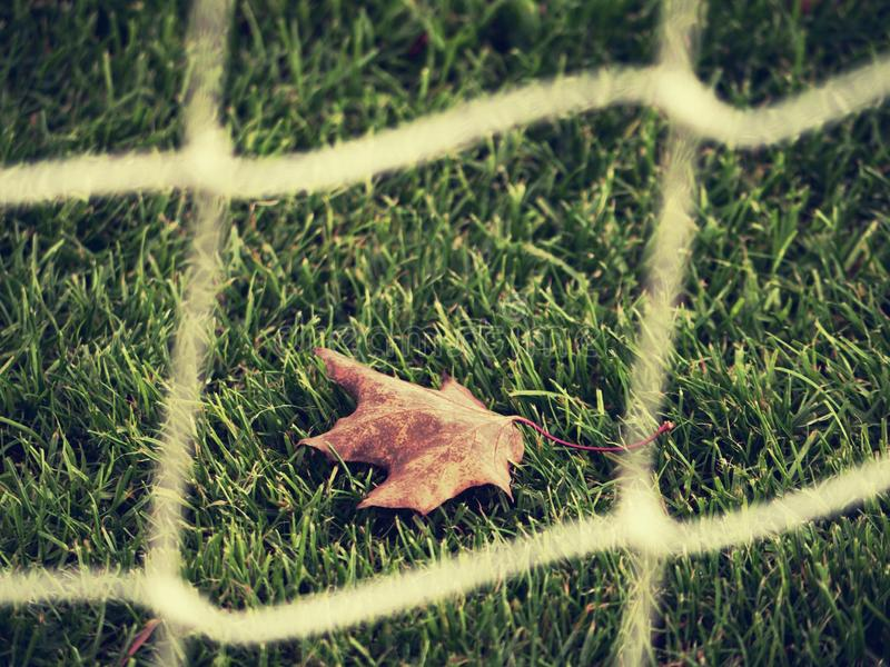 Mesh soccer playground with dry maple leaf. P stock photos